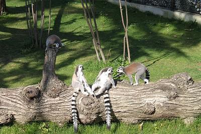 בגן החיות