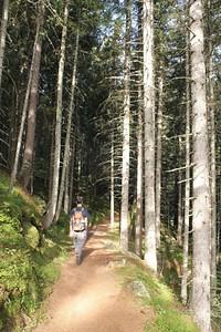 העלייה ביער