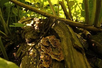 פטריות ביער