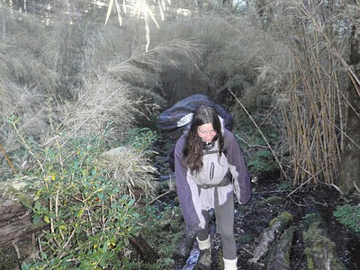 ספוגים בתוך היער