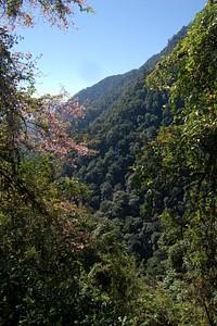 מבט בין העצים בתחילת הדרך