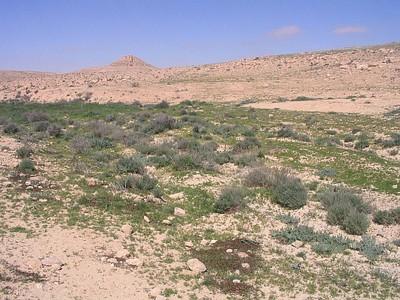 מדרונות דשא במדבר- מחזה מרהיב
