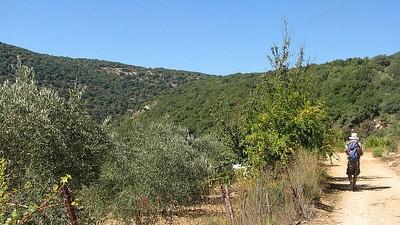 מטעי זיתים ורימונים - סמוך לכפר חורפיש שבגליל העליון