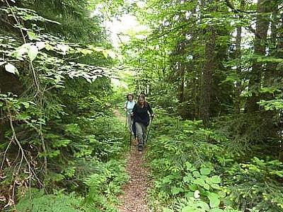 יער צפוף וסבוך