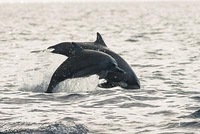 הדולפינים בהם פגשנו