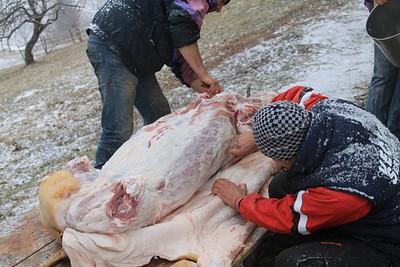 חזיר שהיה פעם חי