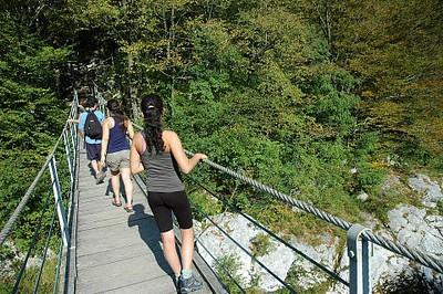 גשר העץ בדרך למפל