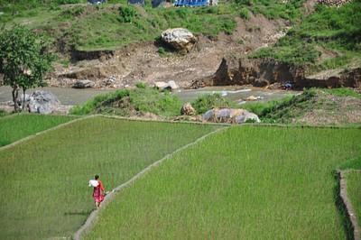 שדות אורז בדרך לאגמים