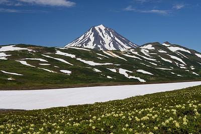הר הגעש ווילוצ׳ינסקי ופריחה צהובה מדהימה. חודש אח״כ הפריחה לא הייתה