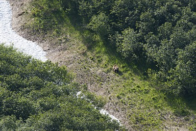 הדוב הראשון שפגשנו - מסתכל עלינו מהצד השני של הנחל