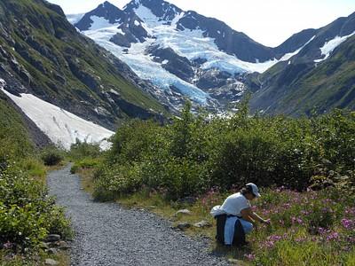 בדרך לקרחון מפגש ראשון עם צמחי ה- fire weed