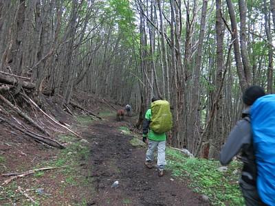 הליכה בתוך היער במעלה ההר
