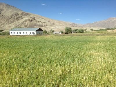 הכפר באצ׳ור