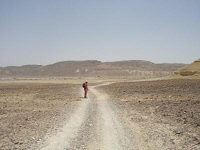 ההליכה בפארן