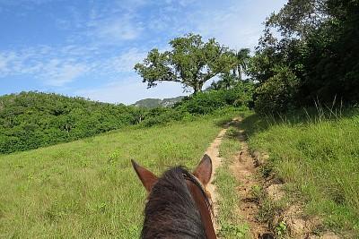 טיול סוסים - עוברים בשדות הירוקים