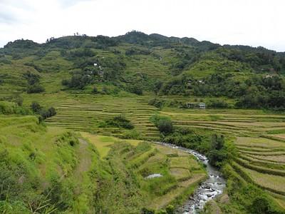 בשדות האורז של בנאווי