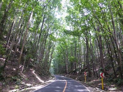 הכביש מלובוק לכרמן