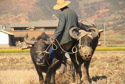 איכרים בעמק שאשי