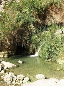 בריכה בנחל דוד