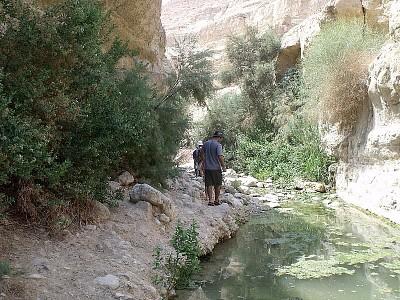 הליכה לאורך הנחל