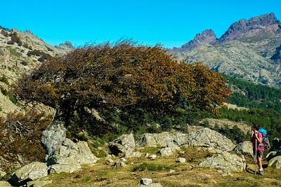 עצים שצמחו בתנאי רוח לא פשוטים :)