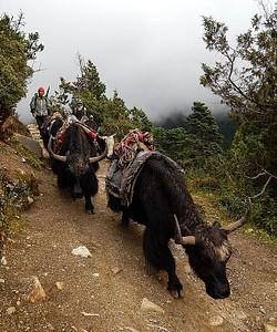 בדרך ל-Tengboche