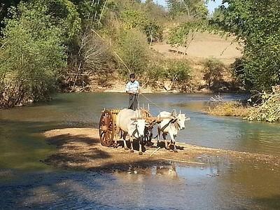 חקלאי בטרק קלאו- אילה לייק