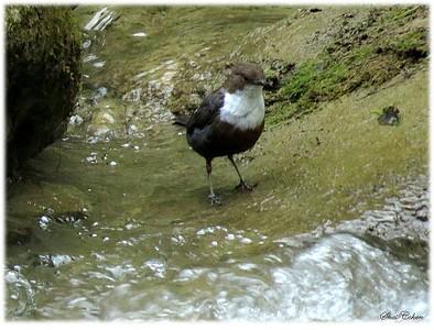 ואיך אפשר בלי ציפור....אמודעי מקסים בנחל בשמורת ביקז