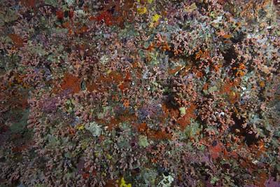 קיר חי וצבעוני