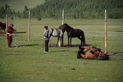 הסוסים שלנו משתעשעים
