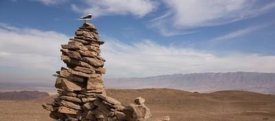 סלעית בפסגת הר תמנע