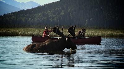 אייל קורא (Moose) בסמוך לחותרים