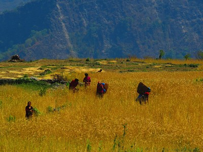 טראסות חקלאיות אחרי sibang