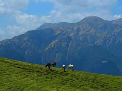 סוסים בדרך