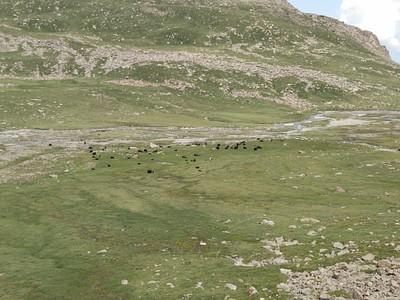 עדר יק