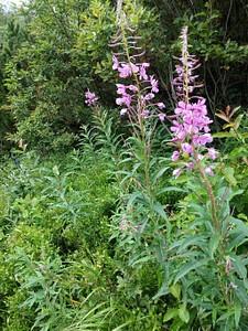 גם בקיץ ישנם פרחים רבים לאורך המסלול
