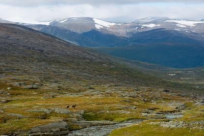 מתחילים את הירידה לכיוון הבקתה עם איילי צפון על רקע ההרים במערב
