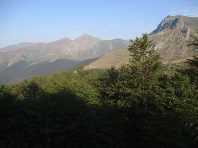 הנוף מעל קו העצים