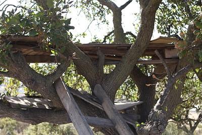 בית העץ