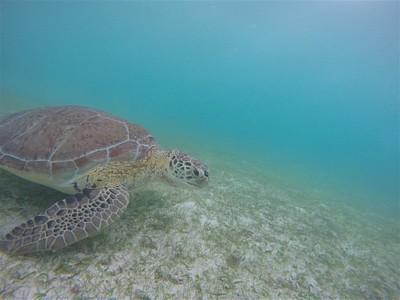 (Akumal) -חוף הצבים 4