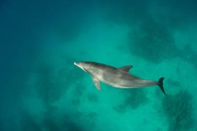 דולפינים ב- Dolphin house