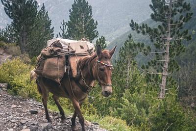 פרד שנפרד מהשיירה העולה, בדרך למטה חזרה לפריוניה
