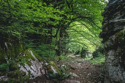 בתוך יער האבן