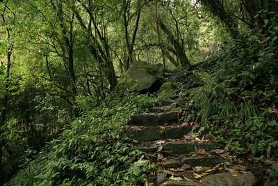 עולים בשביל מדרגות בתוך הגונגל