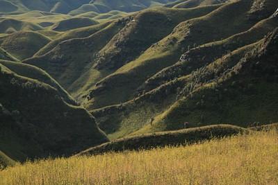 במבוק גמדי ורודדנדרונים פורחים בעמק