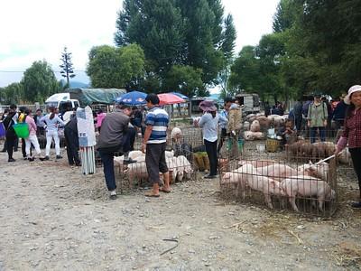 שוק החיות