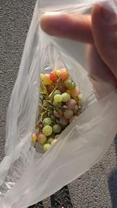 בספארבה בנייה כל בית מגדל ענבים, זקנה שראתה אותנו בוחנים את הענבים נתנה לנו שקית מלאה בענבים טעימים.