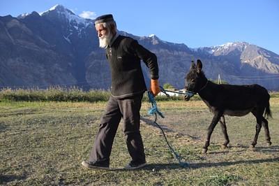 זקן וחמור בכפר פסור