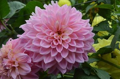 פרחים בעיר סונגפאן