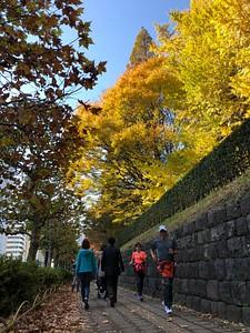 שלכת ברחובות טוקיו